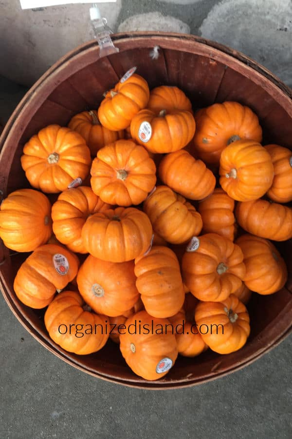 Mini Pumpkins in basket