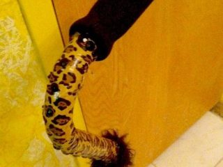 Decorated cane