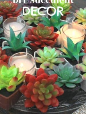 DIY Succulent Decor
