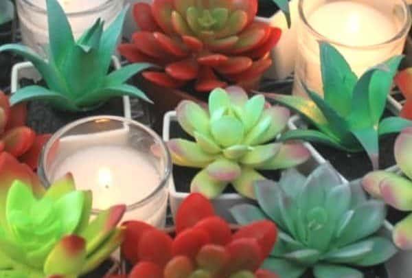 DIY Succulent Decor
