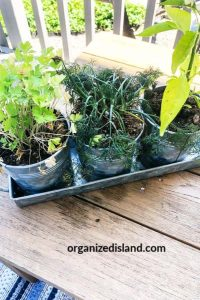 herb garden tips for small herb garden