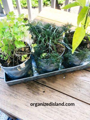herb garden tips for small herb garden