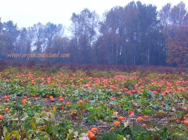 Pumpkin-patch-Oregon