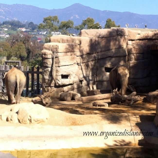 What-animals-are-at-Santa-Barbara-Zoo