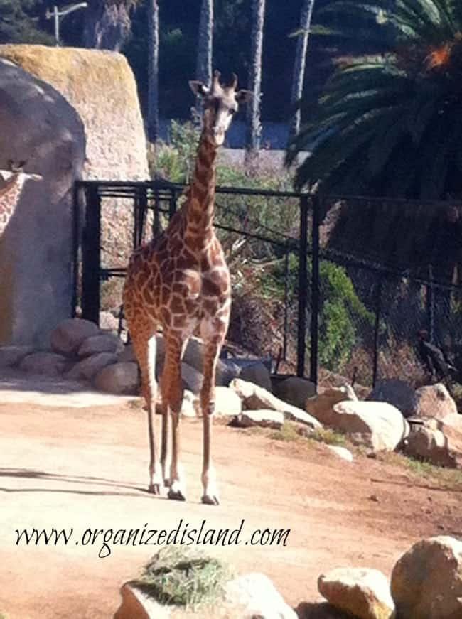 Santa-Barbara-zoo-about