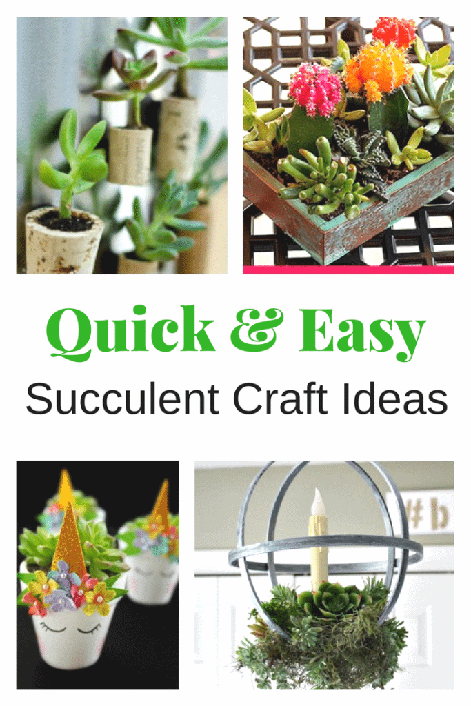 Succulent Crafts Ideas