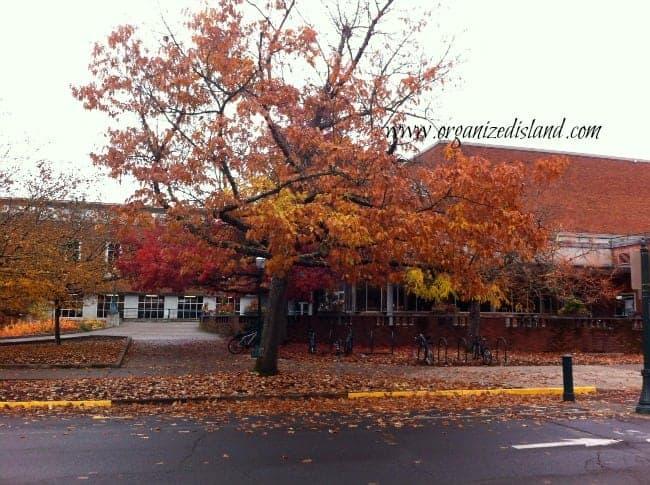beautiful-fall-leaves-autumn