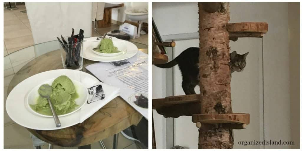 Check out this fun cat cafe in Austria!