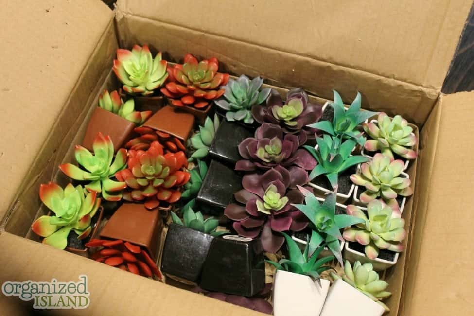 Fun decorating idea with succulents from the dollar store