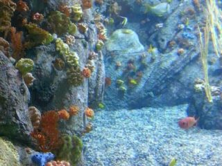 Sea life exhibits at the aquarium
