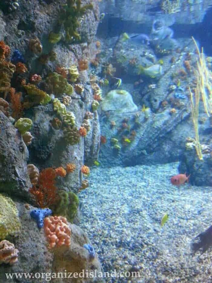 Under The Sea at Aquarium of the Pacific